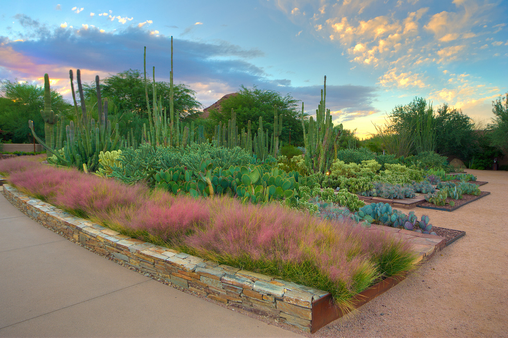 Visit The Desert Botanical Garden Top Places To See In Arizona