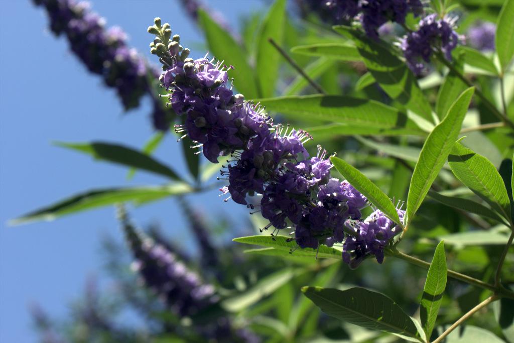 flowering-trees-scottsdale