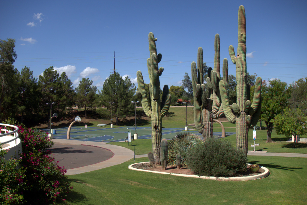 cactus-at-cactus-park